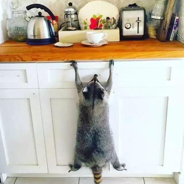 干脆面君太贱了,专业偷猫粮一百年。
