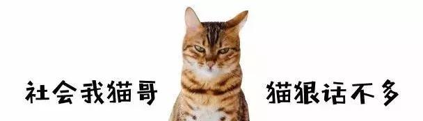 """""""猫咪连毒蛇都不怕,却怕小黄瓜!"""""""