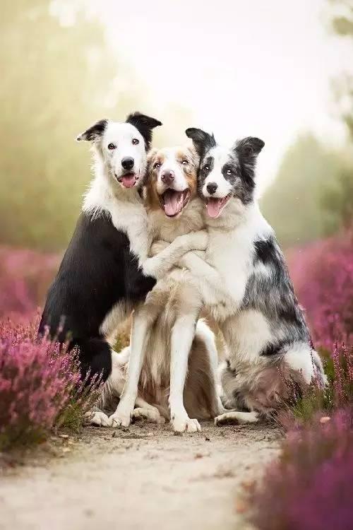 小动物的爱情,可爱!可爱!可爱!
