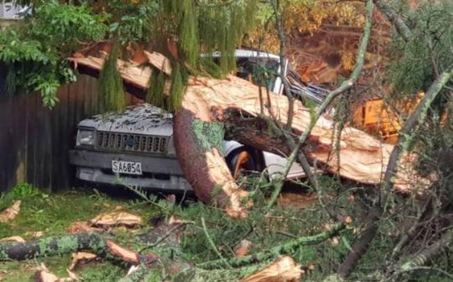 """被闪电击中的大树就像被""""肢解""""了一样,到处都是树干和乱枝,还把一辆卡车困在其中。"""