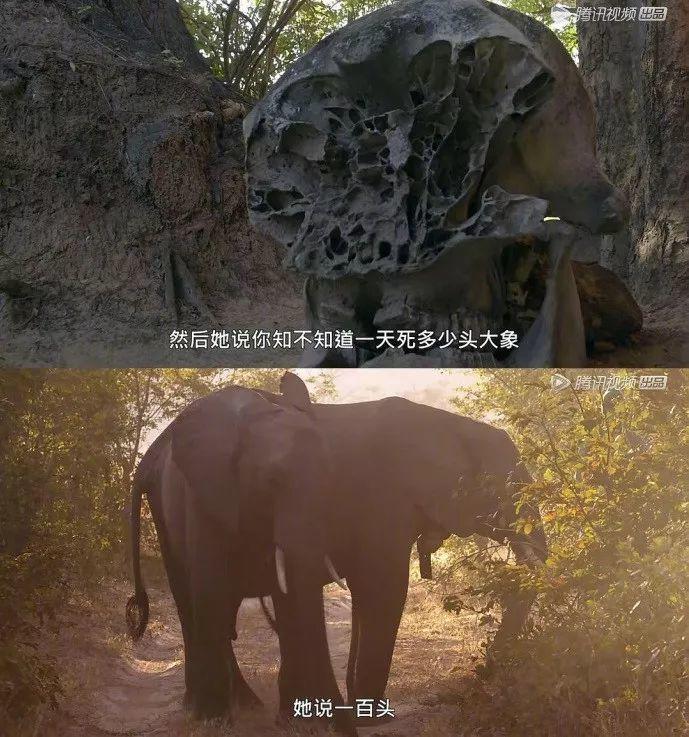 """小S这40年来流泪最多的一次,竟是为了奢侈品:""""只有大象才有权拥有象牙"""""""