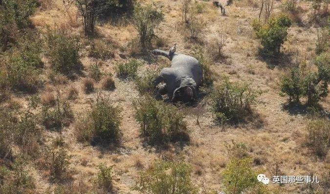 象牙禁令颁布快一年,你还记得那放弃百万年薪跑去非洲做卧底的小伙子吗?
