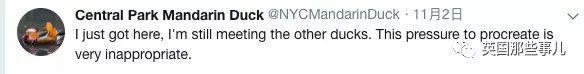 最近,纽约人民被一只
