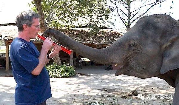 在泰国,他给大象的琴声,却是这些大象最难得的快乐...