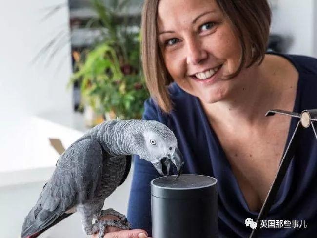 一只灰鹦鹉学会了使用语音助手,给自己网购了一堆好吃的好玩的!