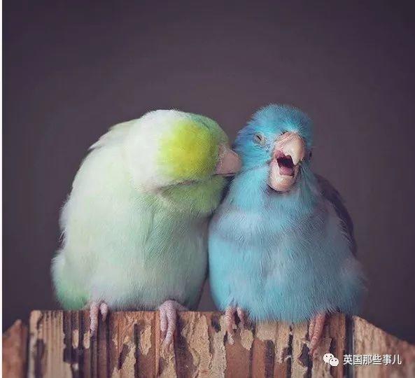 如果给鸟加双手,简直戏精本精了啊