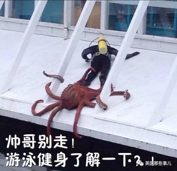 从缸里越狱出来甩饲养员一只虾?章鱼智商如此高,真不是外星生物?