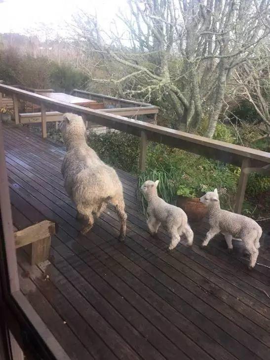 在纽村牧羊的那些日子