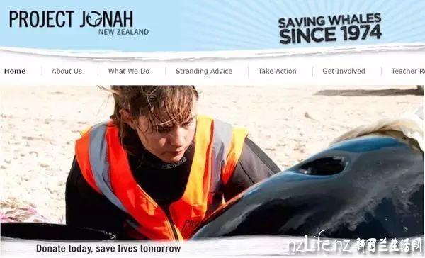 新西兰南岛100多头鲸等待紧急救援!416头鲸搁浅300头死亡