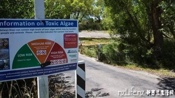 """净土中的""""地狱""""—新西兰坎特伯雷河已被""""严重污染"""""""