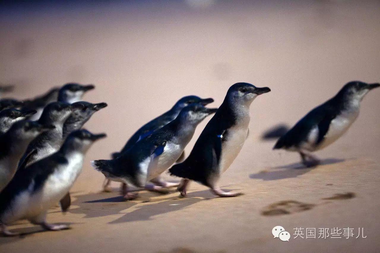 大洋洲的动物萌死人? 嗯,要么萌,要么......死人