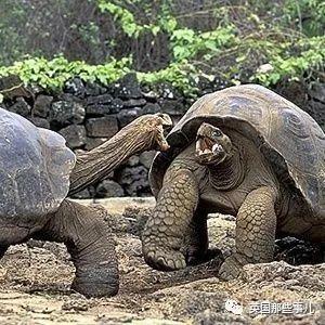 恩爱90年的象龟夫妻忽然大打出手闹离婚,就此成了最熟悉的陌生龟