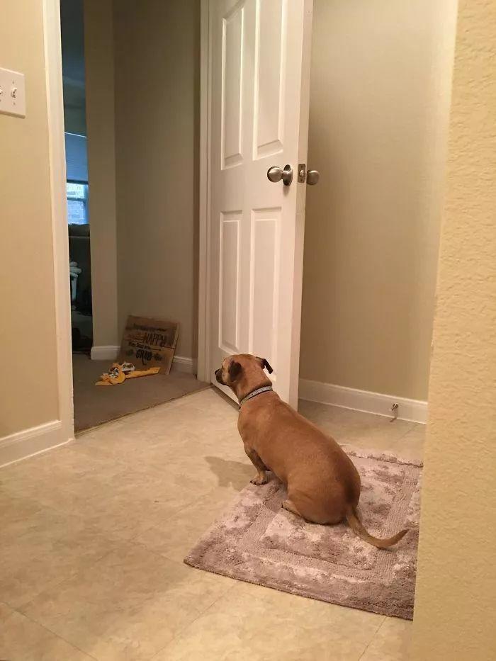 """""""我的狗狗总是一脸担心地盯着我洗澡"""""""