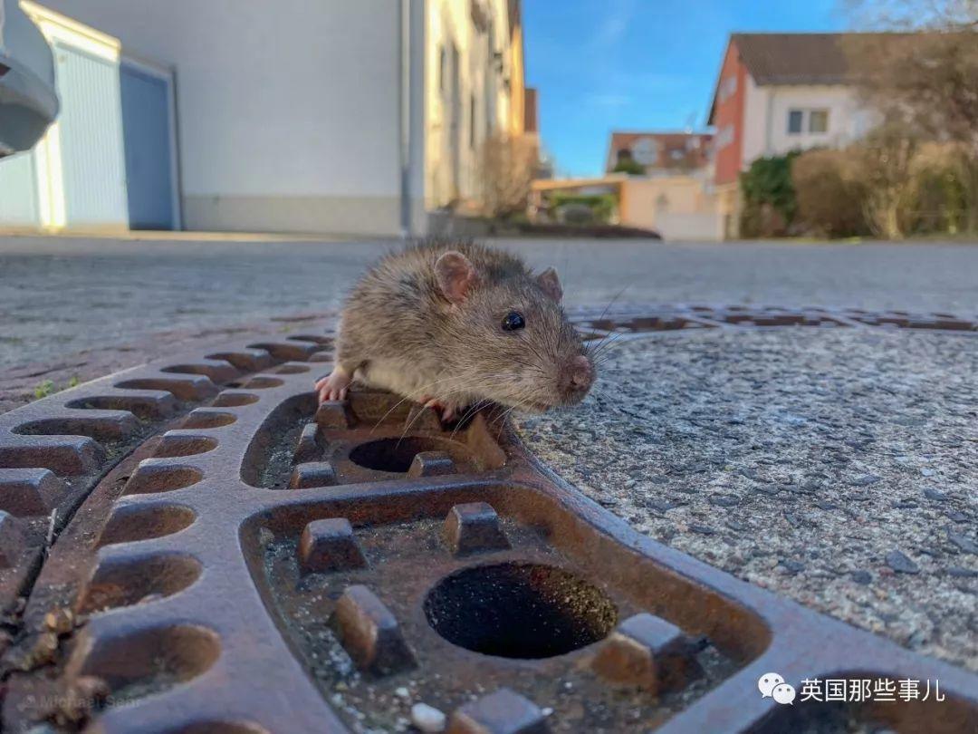 为了救只太胖卡住的老鼠,德国竟然出动了一支消防队..