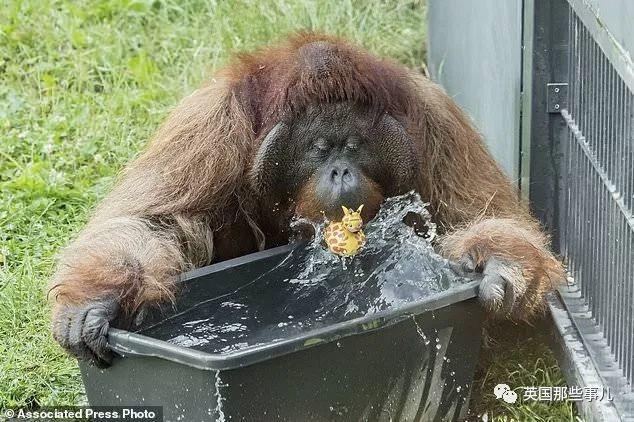 撒哈拉热浪突袭欧洲!连动物园都开始给动物擦防晒霜了!