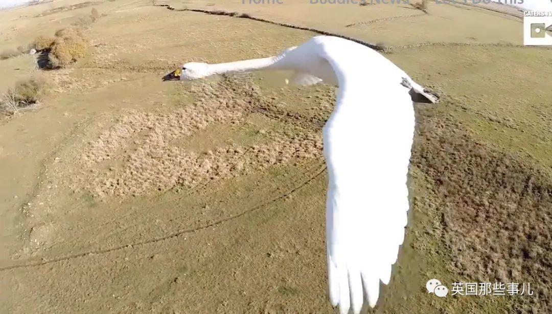 亲自开飞机教候鸟重建迁徙路线!这大叔是什么传奇人生!