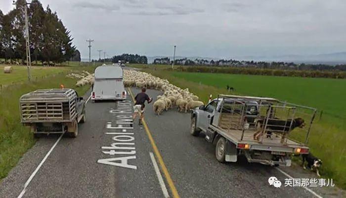 谷歌街景车意外拍到的沙雕动物们……也是意想不到的快乐源泉啊!