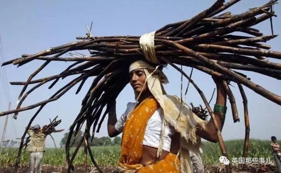 印度成千上百年轻女性,为保住一份微薄工资,选择切除子宫...