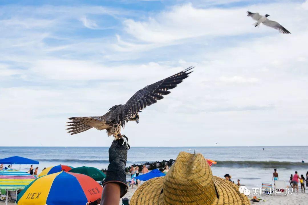 人类完全打不过在这里成精的海鸥,万不得已之下,他们只能派出这支特种小分队...
