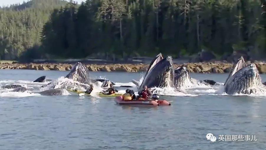 人类能被鲸鱼吞下吗?还能活着出来吗?这奇葩问题居然真有了答案