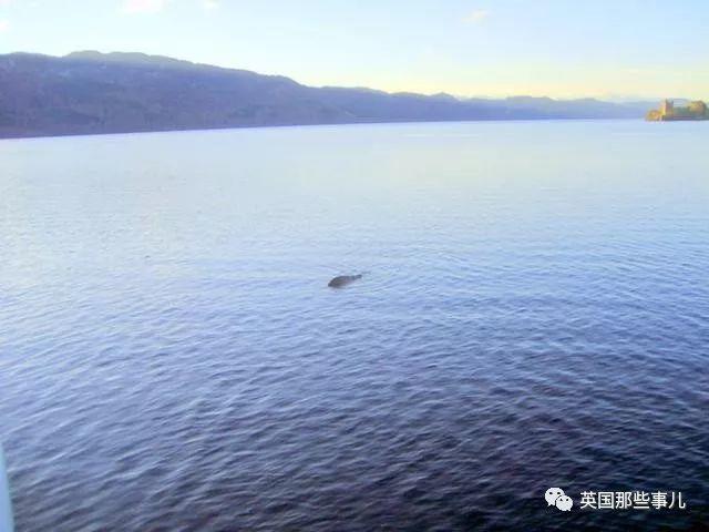 科学家查了几百罐尼斯湖水的DNA,传说中水怪,其实可能是条大鳗鱼???