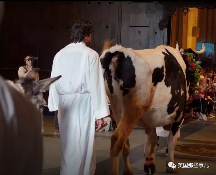 一千多只各种动物去教堂走红毯,这是什么童话场景啊!