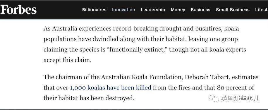 考拉因为大火将功能性灭绝? 科学家:才没有!