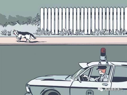 一条长相奇特的狗,死后居然出庭破获了一桩神秘的午夜谋杀案!