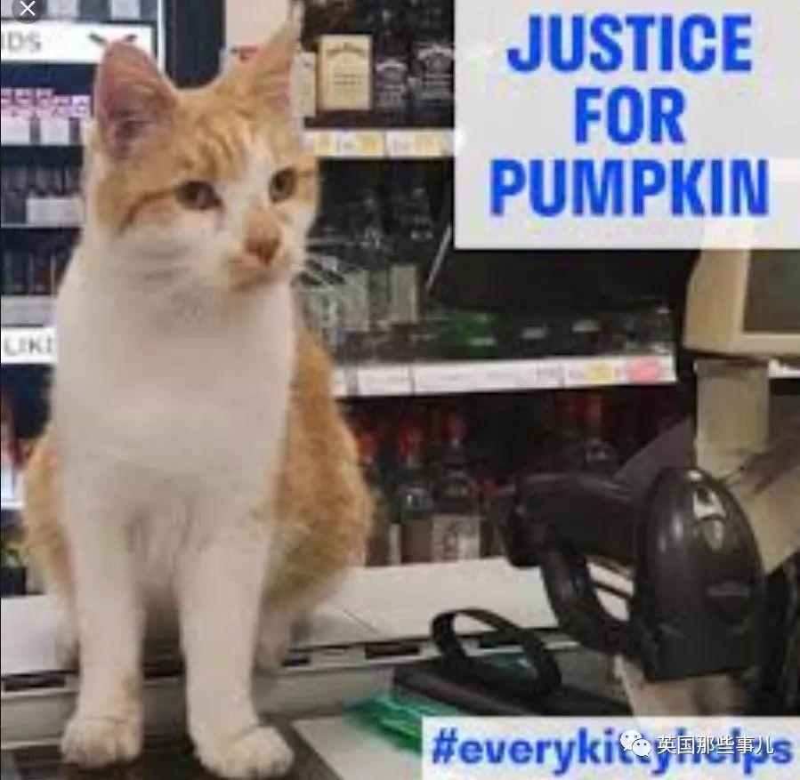 无法无天,为所欲为!这只拽到被BBC报道的橘猫,居然不是因为胖才出名的!