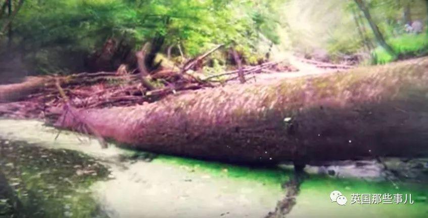 飞机空中解体,17岁的她从空中落入亚马逊雨林,随后的一切堪称传奇!
