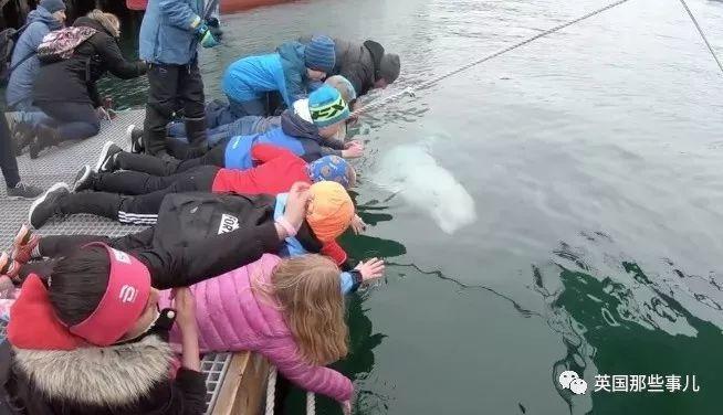 当年差点引发国际间谍风波的白鲸,现在居然成了卖萌为生的网红