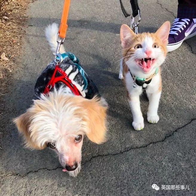 家里的狗爱上了一只流浪猫,能咋办,只能一起宠了呗~