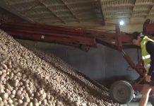 新西兰土豆业呼吁政府紧急干预,以阻止炸薯条的入侵。