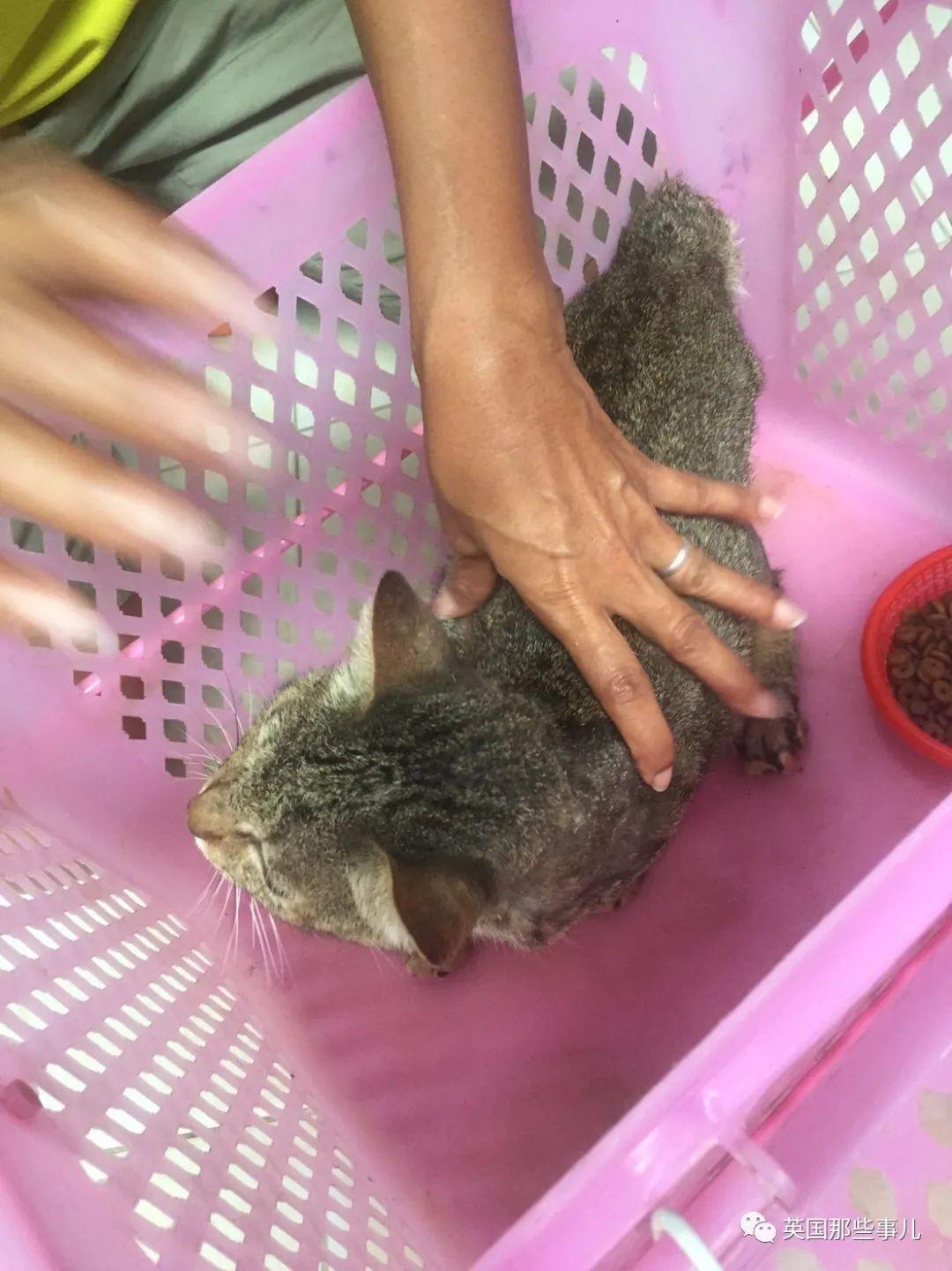 中国男子在泰国虐猫,被捕还辩称不懂法律,如今判刑遣返!