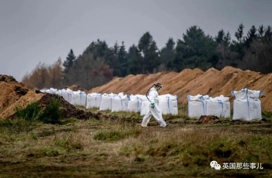 丹麦数千只死貂尸体忽然破土而出涌向地面…网友:僵尸剧情终于来了??!